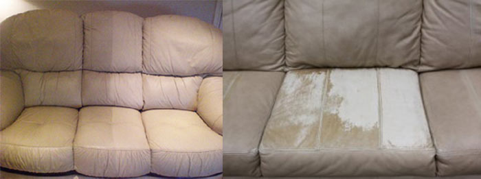 Professional Upholstery Cleaning Collector